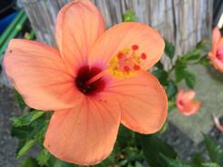 夏の植物がくれる癒し